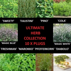 Ultimate Herb Collection. 1 x plug plant each of 10 different herbs.